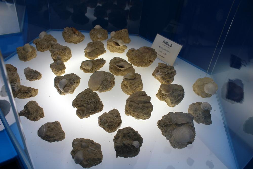 http://pangea-note.com/museum/blogimg/0002/1-IMG_0129.JPG
