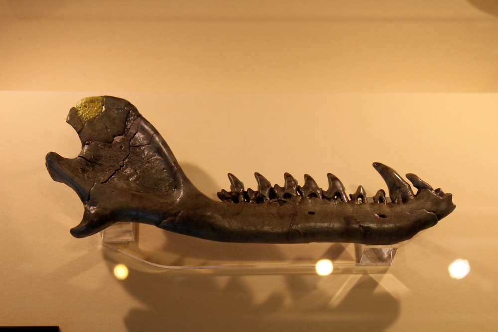 http://pangea-note.com/museum/blogimg/0002/1-IMG_0810.JPG