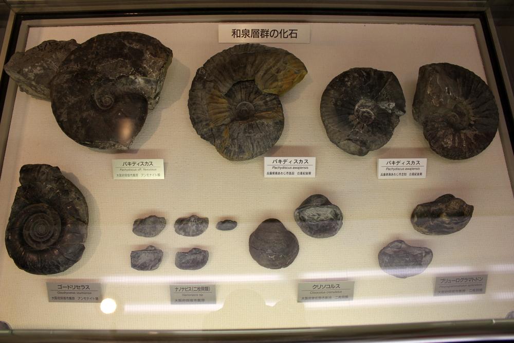 http://pangea-note.com/museum/blogimg/0002/1-IMG_1209.JPG