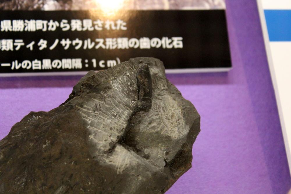 http://pangea-note.com/museum/blogimg/0002/1-IMG_1215.JPG
