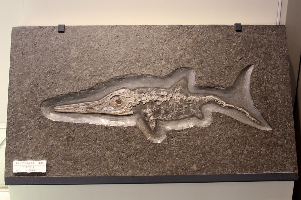 http://pangea-note.com/museum/blogimg/0002/1-IMG_1233.JPG