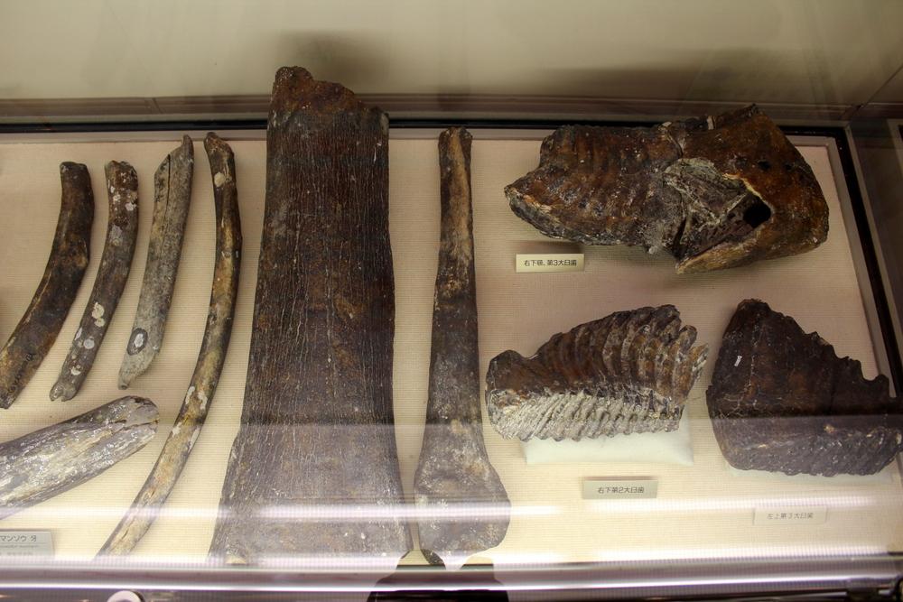 http://pangea-note.com/museum/blogimg/0002/1-IMG_1252.JPG