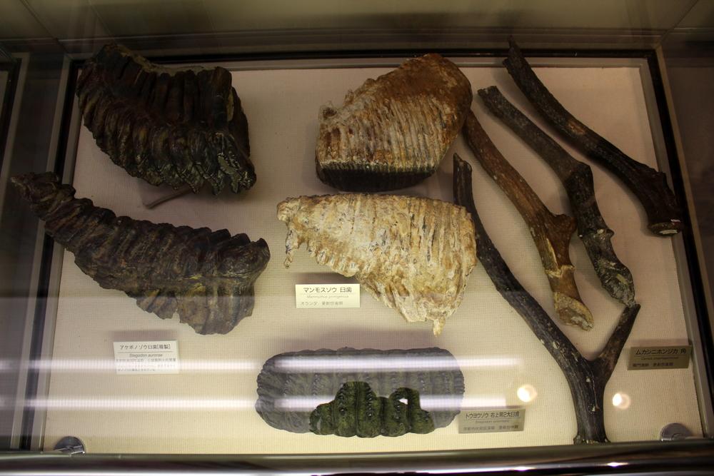 http://pangea-note.com/museum/blogimg/0002/1-IMG_1253.JPG