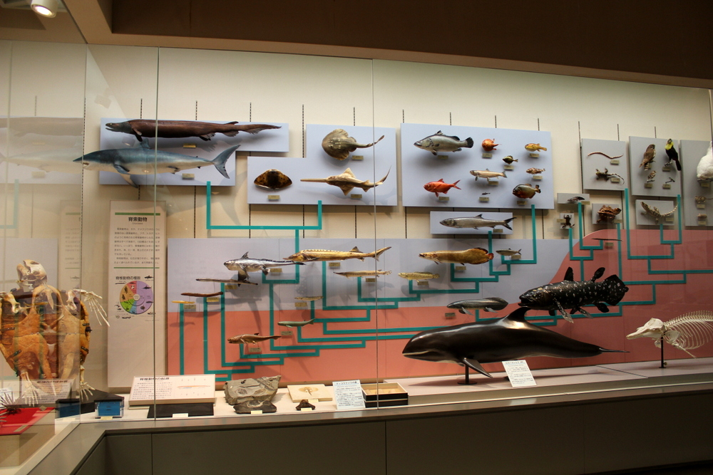 http://pangea-note.com/museum/blogimg/0002/1-IMG_1296.JPG