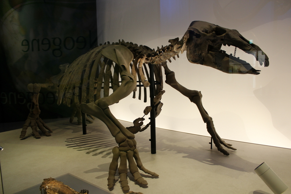 http://pangea-note.com/museum/blogimg/0002/1-IMG_1565.JPG