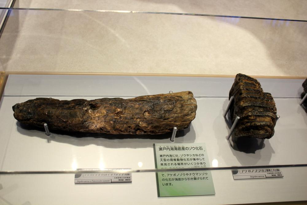http://pangea-note.com/museum/blogimg/0002/1-IMG_1579.JPG