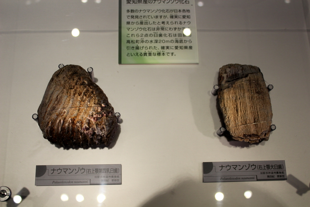 http://pangea-note.com/museum/blogimg/0002/1-IMG_1585.JPG