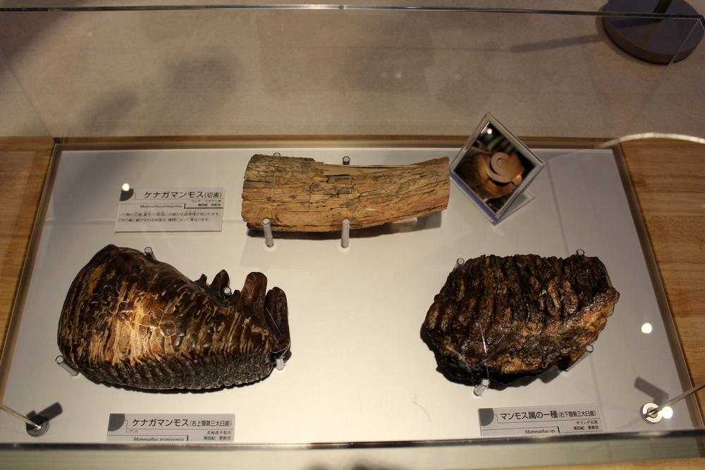 http://pangea-note.com/museum/blogimg/0002/1-IMG_1589.JPG