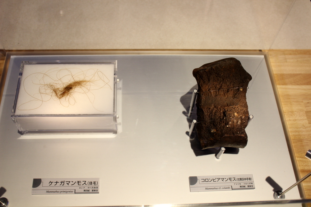 http://pangea-note.com/museum/blogimg/0002/1-IMG_1591.JPG