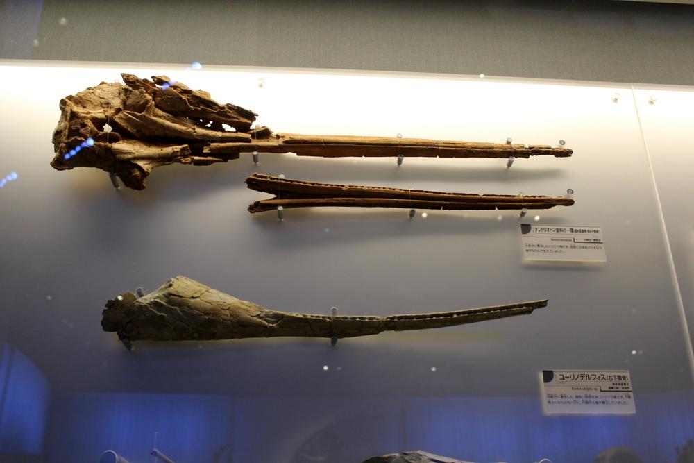 http://pangea-note.com/museum/blogimg/0002/1-IMG_1595.JPG