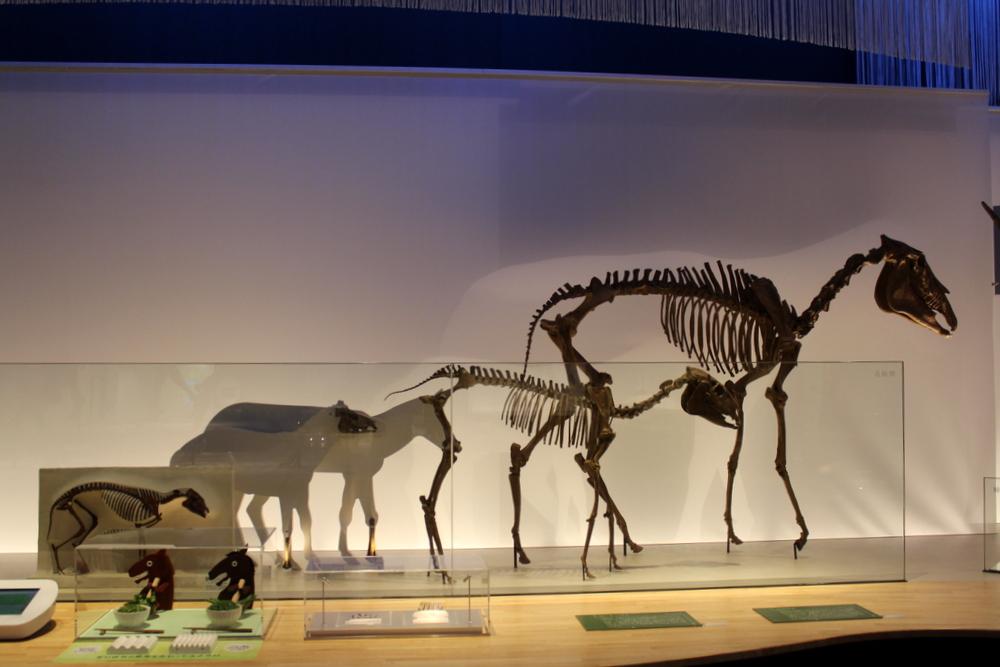 http://pangea-note.com/museum/blogimg/0002/1-IMG_1610.JPG