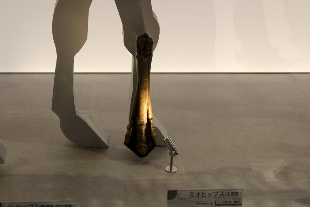 http://pangea-note.com/museum/blogimg/0002/1-IMG_1618.JPG