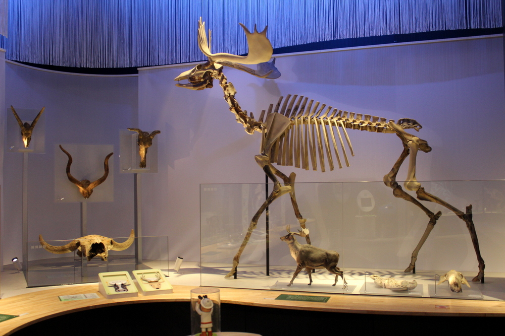 http://pangea-note.com/museum/blogimg/0002/1-IMG_1629.JPG