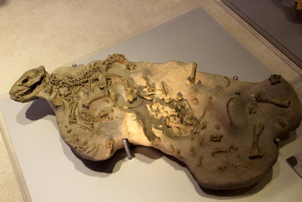 http://pangea-note.com/museum/blogimg/0002/1-IMG_1632.JPG
