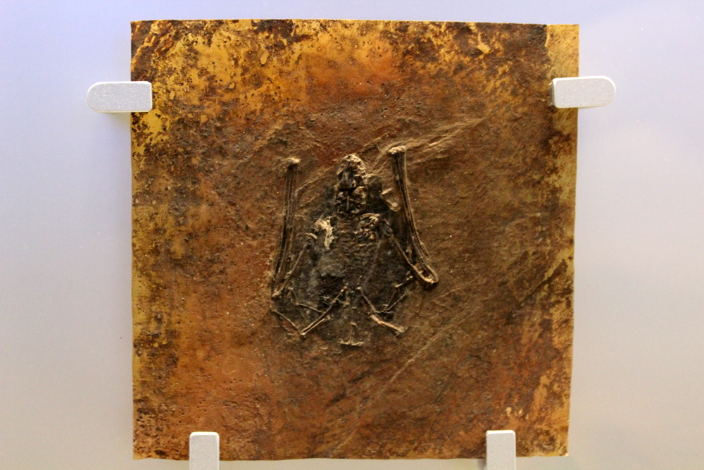 http://pangea-note.com/museum/blogimg/0002/1-IMG_1654.JPG