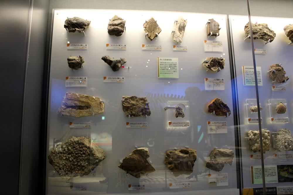 http://pangea-note.com/museum/blogimg/0002/1-IMG_1661.JPG