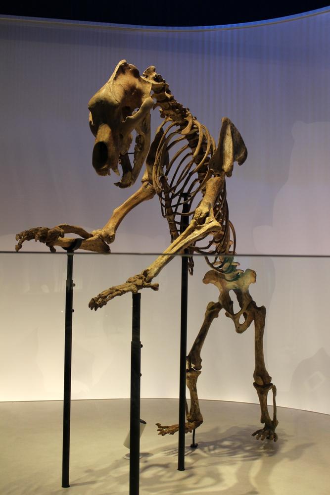 http://pangea-note.com/museum/blogimg/0002/1-IMG_1668.JPG