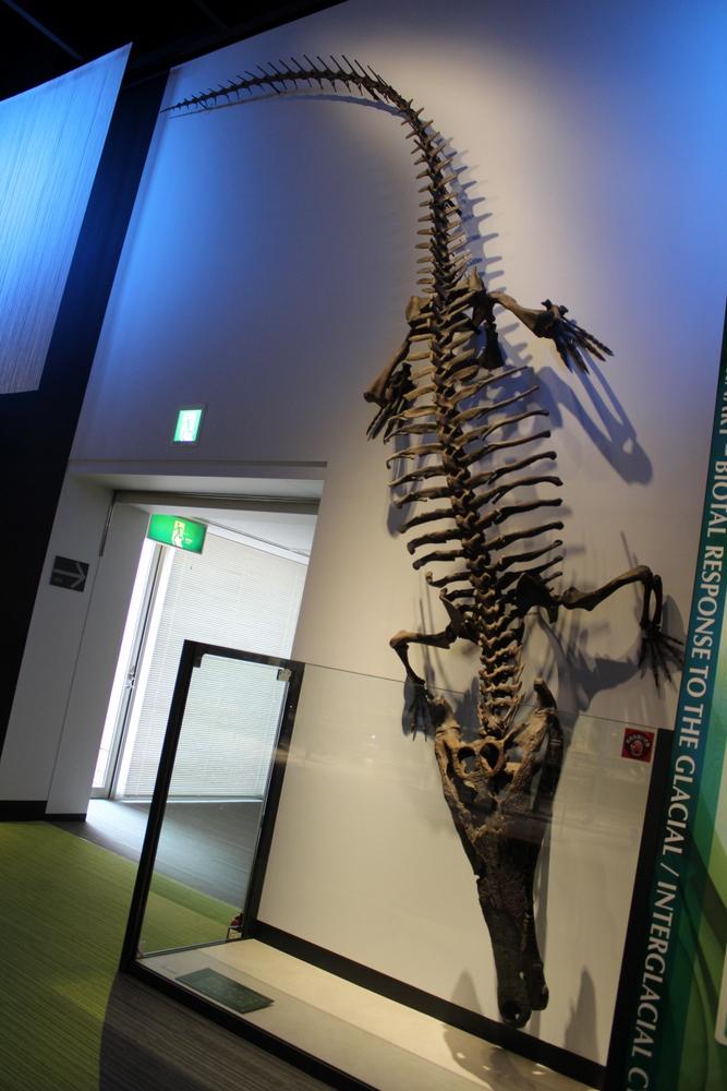 http://pangea-note.com/museum/blogimg/0002/1-IMG_1676.JPG