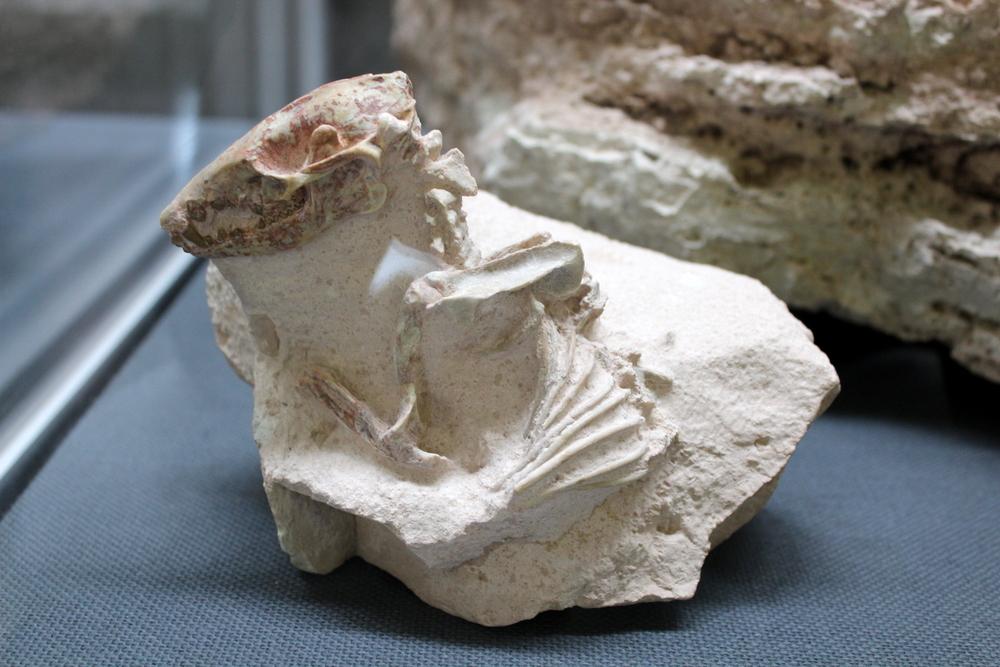 http://pangea-note.com/museum/blogimg/0002/1-IMG_1693.JPG