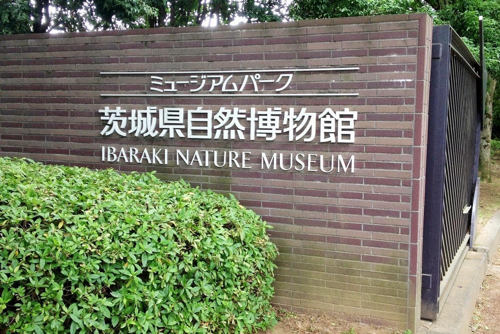 http://pangea-note.com/museum/blogimg/1-%E5%86%99%E7%9C%9F%202013-06-07%2011%2053%2029.jpg