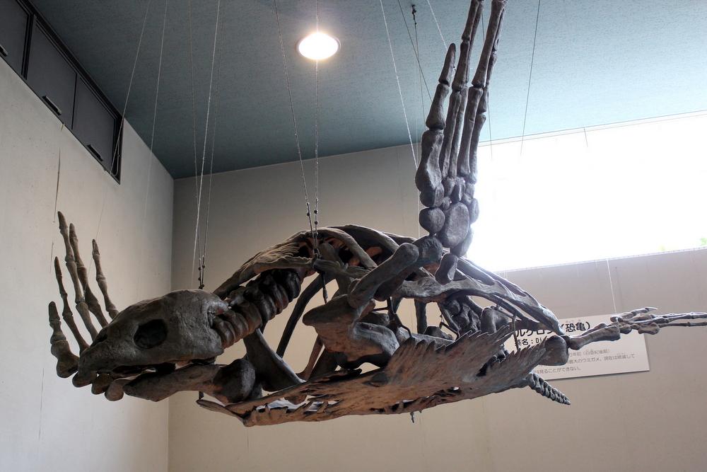 http://pangea-note.com/museum/blogimg/1-IMG_0164.JPG