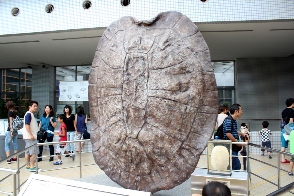 http://pangea-note.com/museum/blogimg/1-IMG_0167-2.JPG