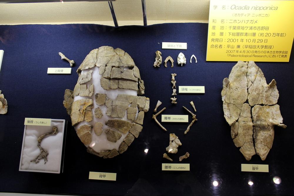 http://pangea-note.com/museum/blogimg/1-IMG_0197.JPG