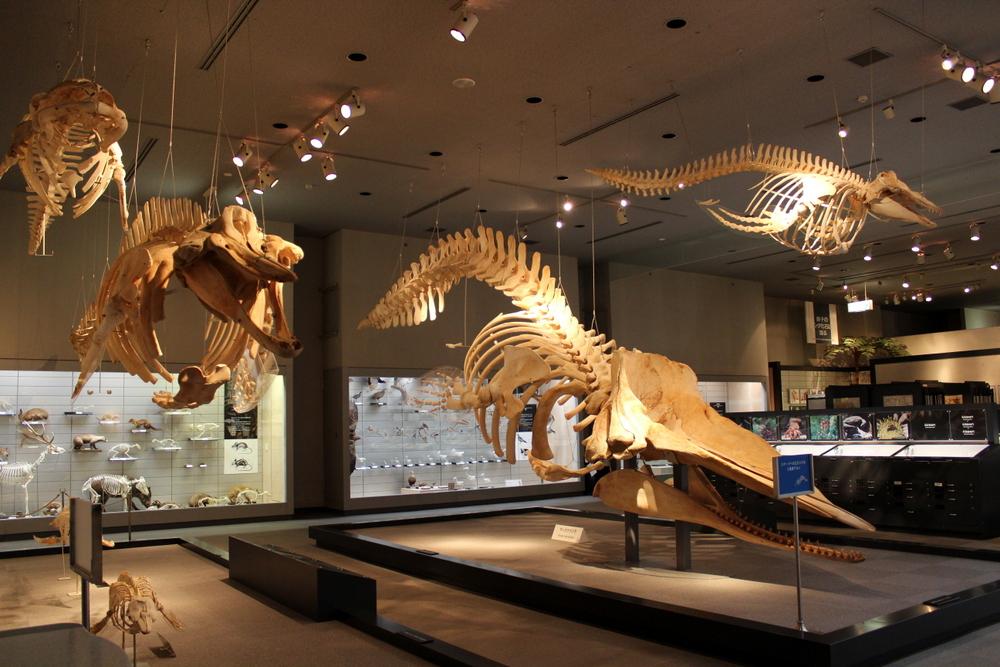 http://pangea-note.com/museum/blogimg/1-IMG_0215.JPG