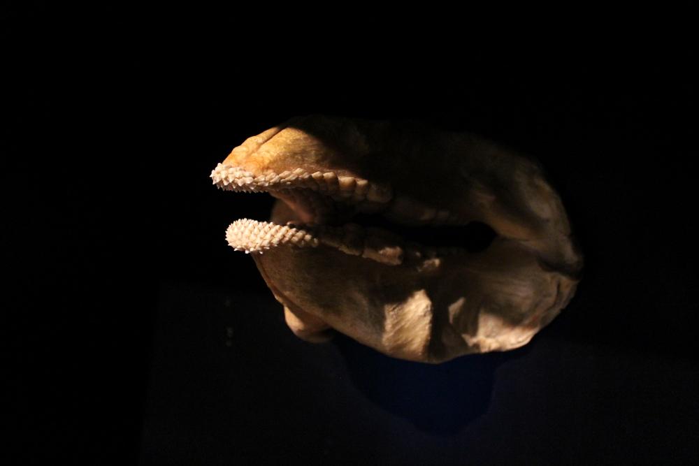 http://pangea-note.com/museum/blogimg/1-IMG_0216_1.JPG