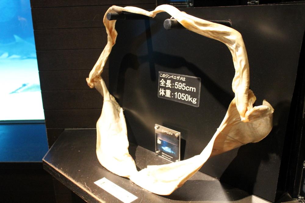 http://pangea-note.com/museum/blogimg/1-IMG_0219.JPG