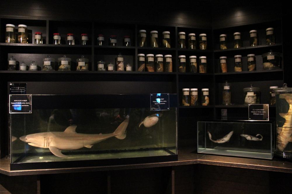 http://pangea-note.com/museum/blogimg/1-IMG_0235.JPG