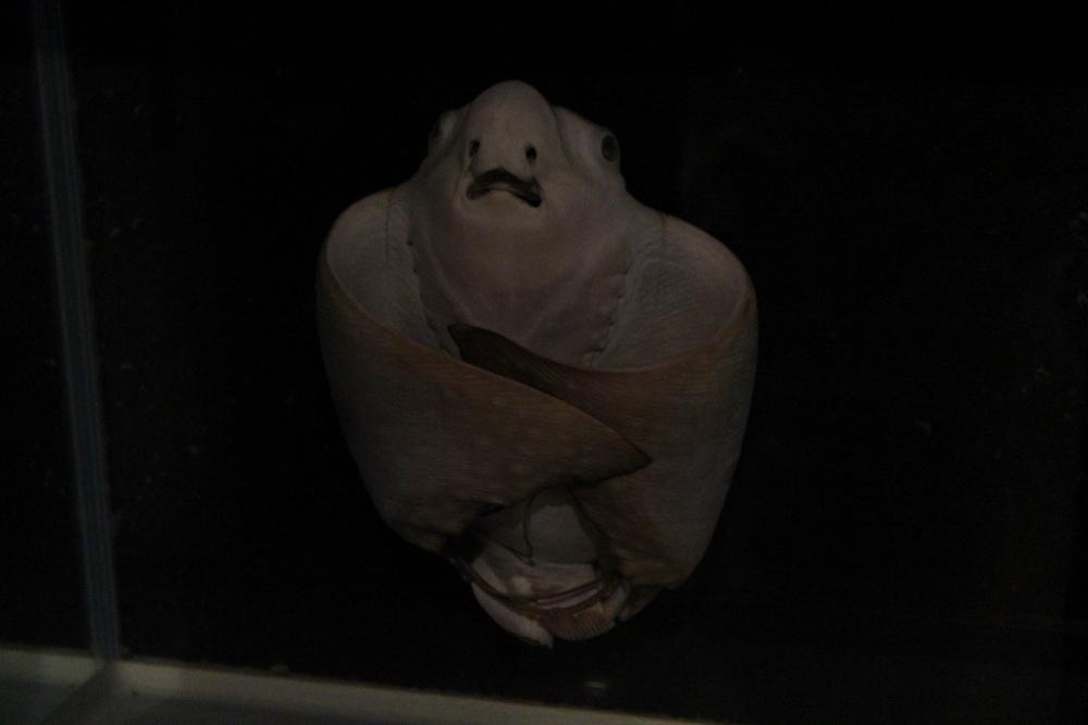 http://pangea-note.com/museum/blogimg/1-IMG_0241.JPG