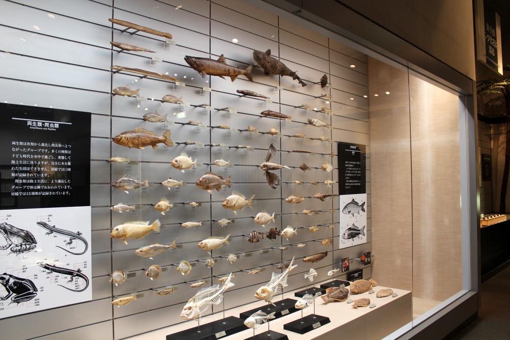 http://pangea-note.com/museum/blogimg/1-IMG_0291.JPG