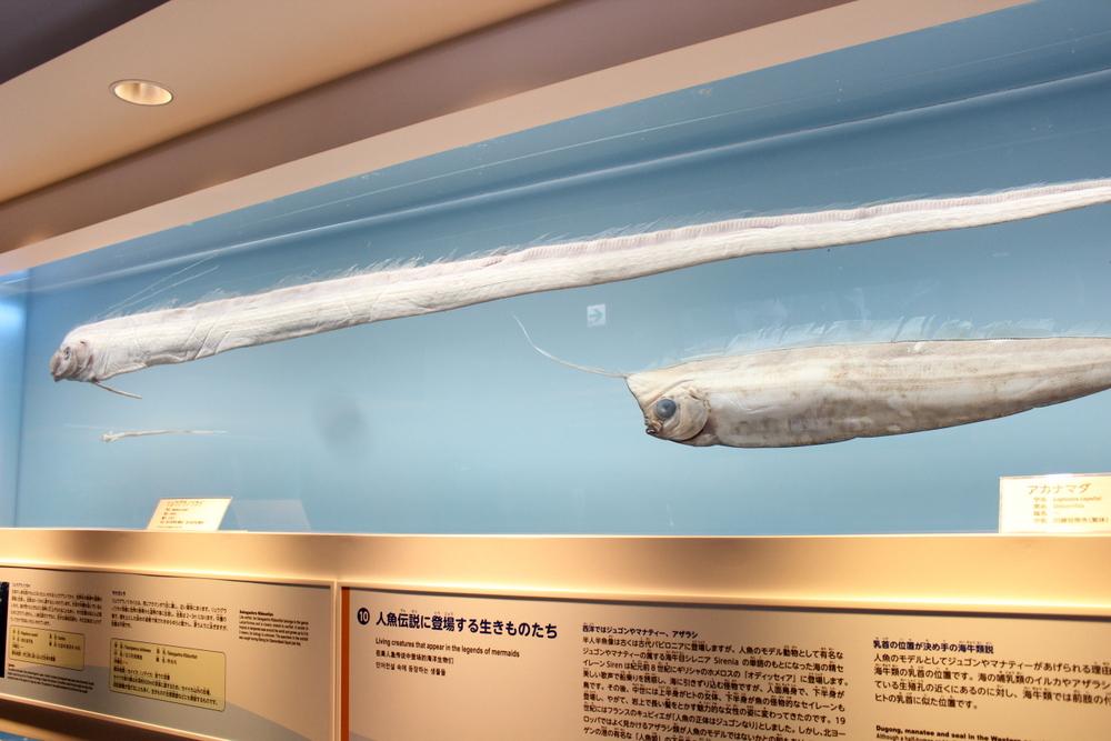 http://pangea-note.com/museum/blogimg/1-IMG_0354.JPG