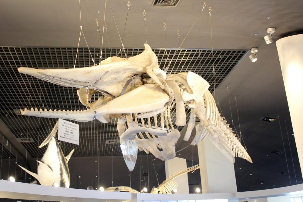 http://pangea-note.com/museum/blogimg/1-IMG_0355.JPG