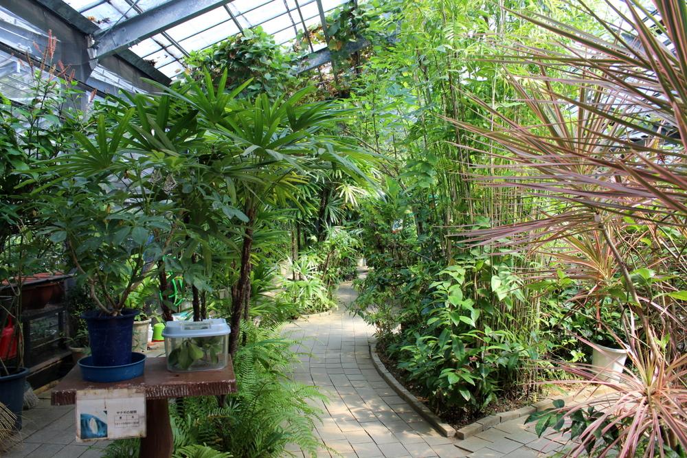 http://pangea-note.com/museum/blogimg/1-IMG_0562.JPG
