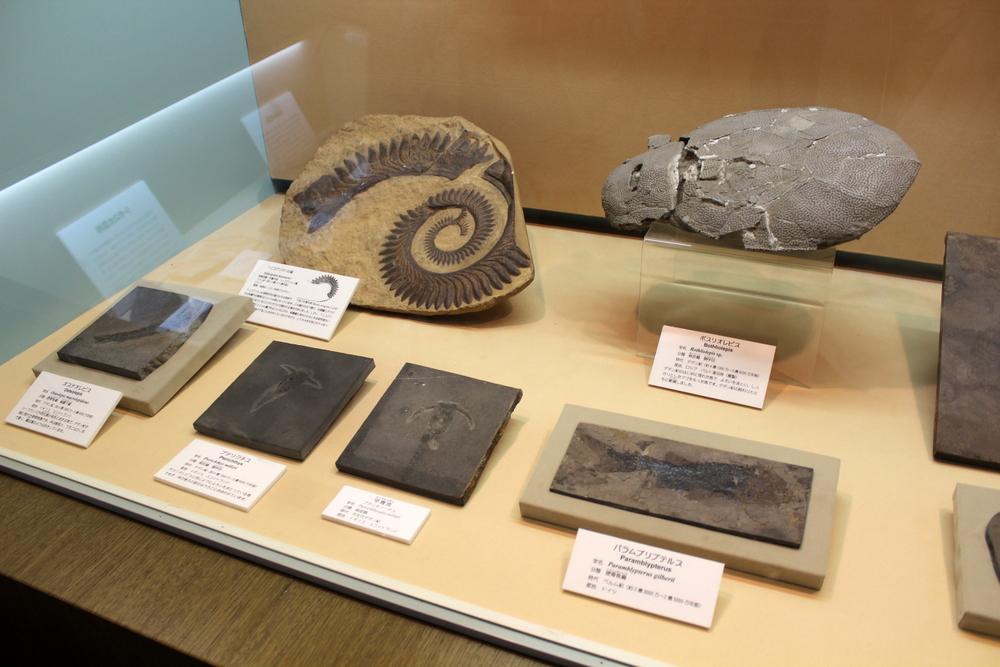http://pangea-note.com/museum/blogimg/1-IMG_0998.JPG