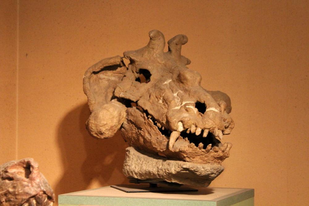 http://pangea-note.com/museum/blogimg/1-IMG_1007.JPG