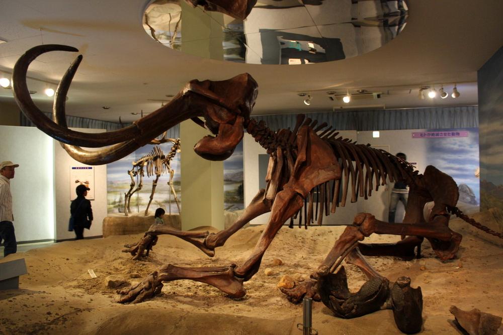 http://pangea-note.com/museum/blogimg/1-IMG_1055.JPG
