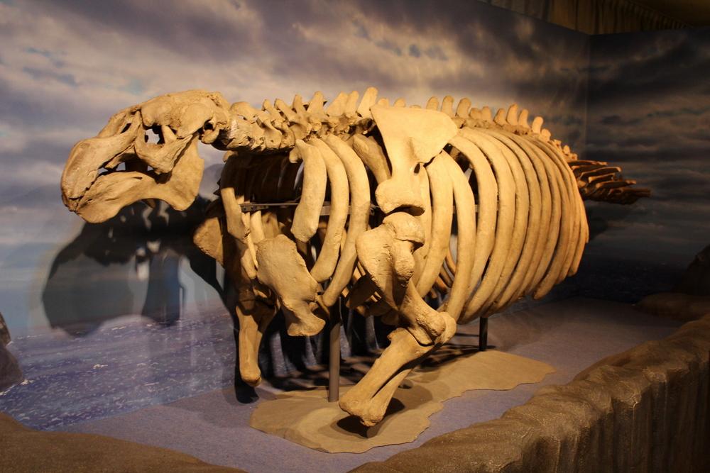 http://pangea-note.com/museum/blogimg/1-IMG_1062.JPG