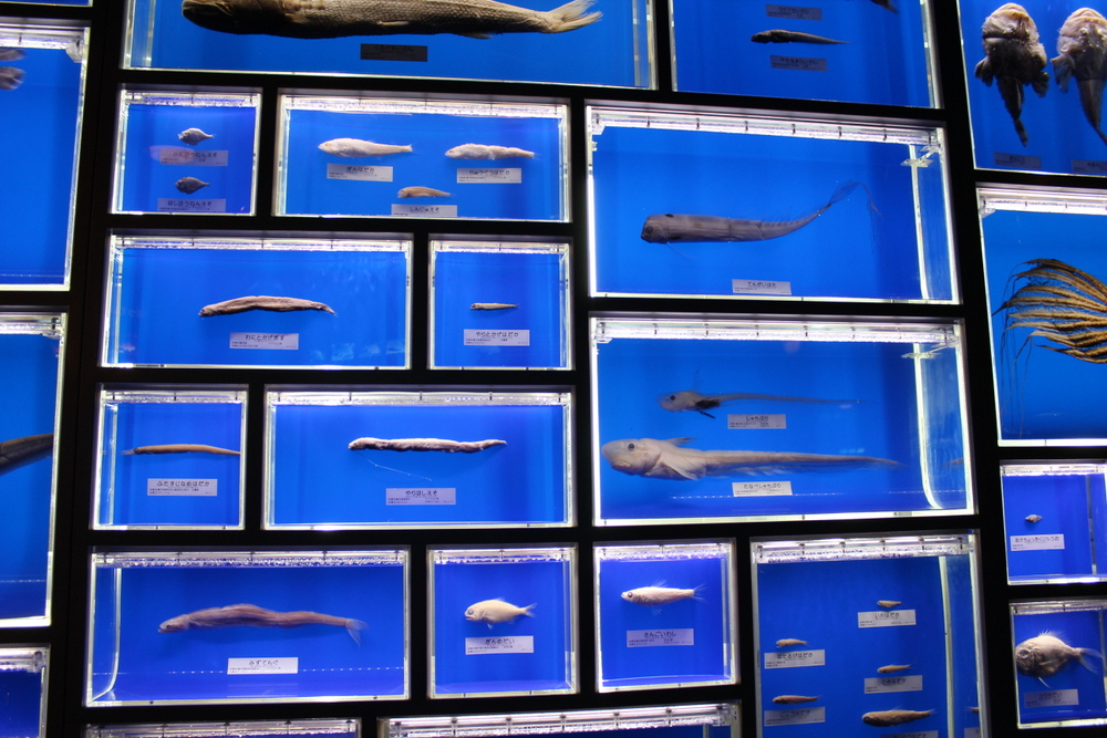 http://pangea-note.com/museum/blogimg/1-IMG_1214.JPG