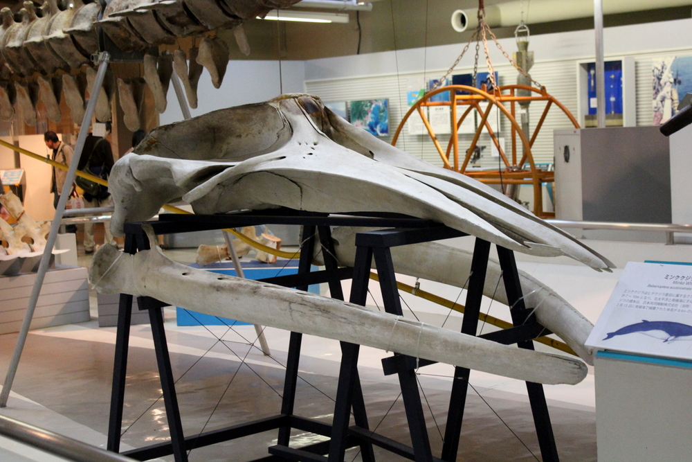 http://pangea-note.com/museum/blogimg/1-IMG_1250.JPG