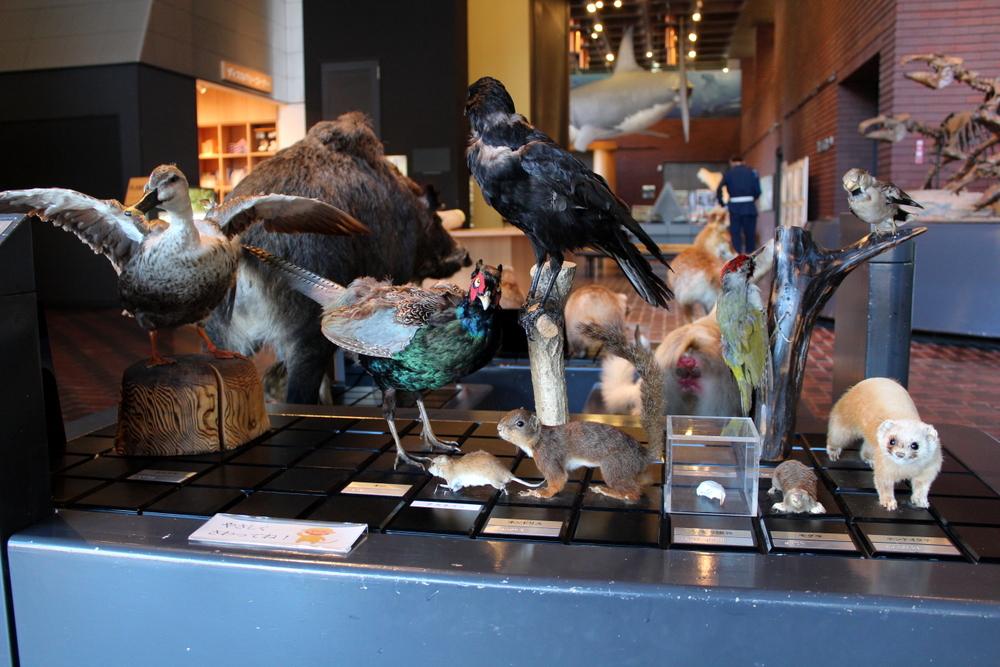 http://pangea-note.com/museum/blogimg/1-IMG_1360.JPG