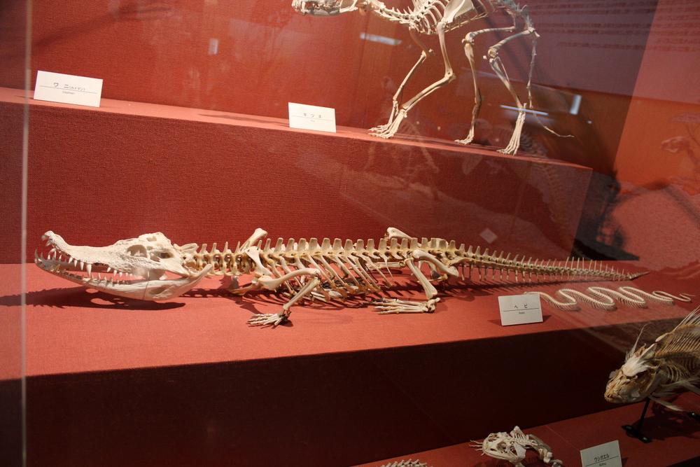 http://pangea-note.com/museum/blogimg/1-IMG_1402.JPG