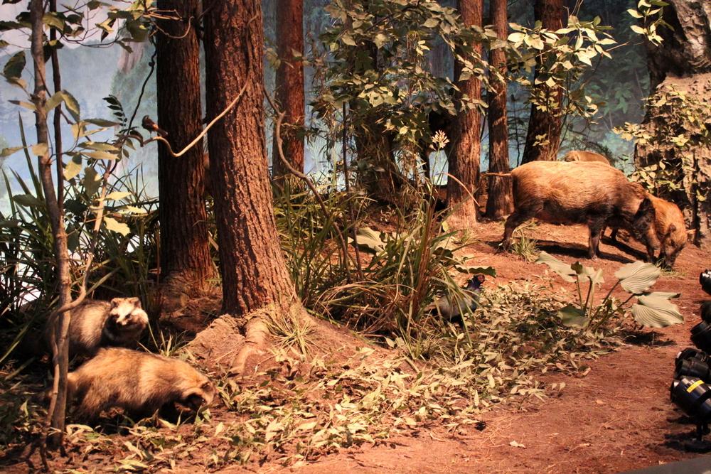 http://pangea-note.com/museum/blogimg/1-IMG_1408.JPG