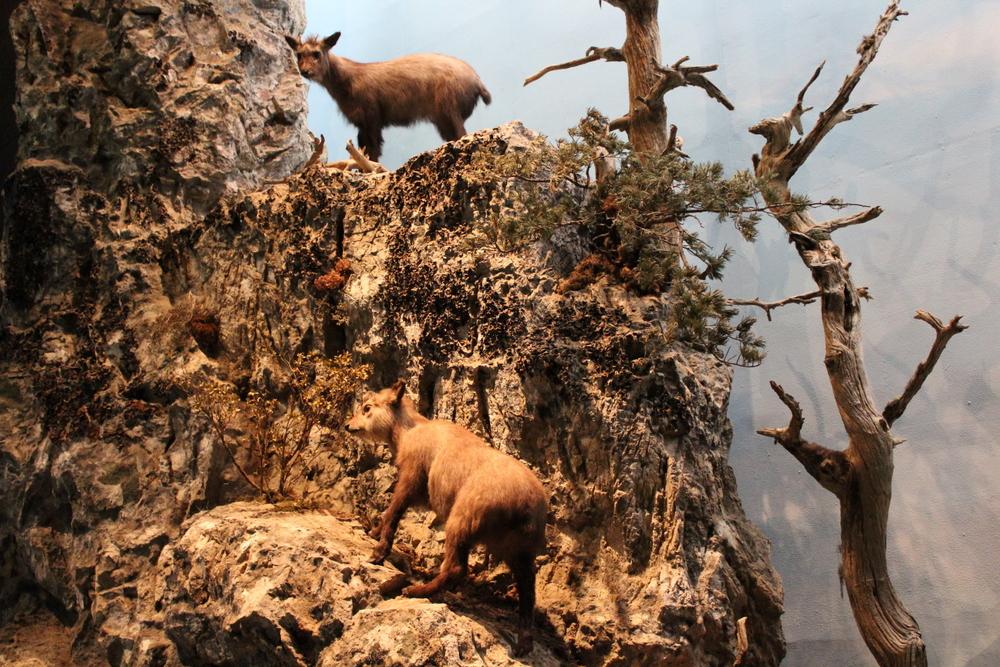 http://pangea-note.com/museum/blogimg/1-IMG_1413.JPG