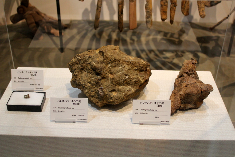 http://pangea-note.com/museum/blogimg/1-IMG_1799.JPG
