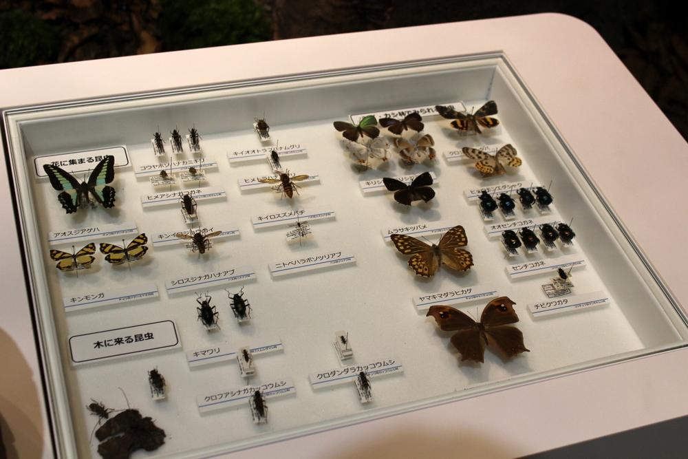 http://pangea-note.com/museum/blogimg/1-IMG_1810.JPG