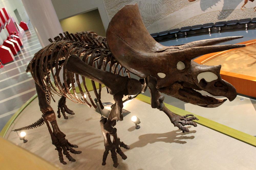 http://pangea-note.com/museum/blogimg/1-IMG_1841.JPG