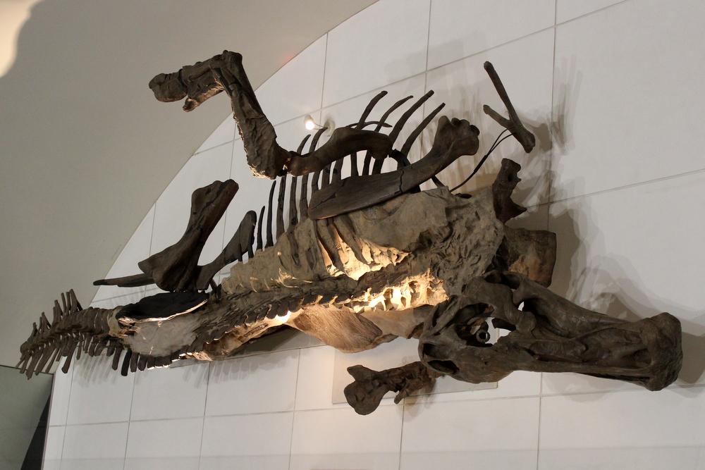 http://pangea-note.com/museum/blogimg/1-IMG_1844.JPG